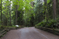 An Explosion of Green. An entrance to an old growth forest in Canada Royalty Free Stock Photos