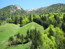 Explosion of green on the mountain. View of an alpine landscape with meadows, forests and rocks Royalty Free Stock Photo