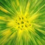Explosion jaune de Dasies Photo stock