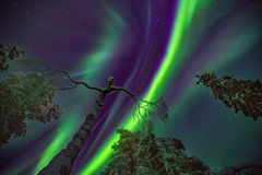 Explosion of Northern lights stock photography
