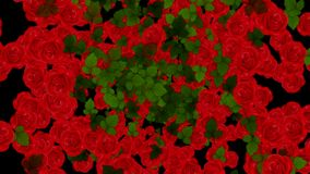 Explosion of Red Roses and Leaves Animation Background. Alpha Channel Included.