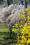 Explosion of spring with blooming trees Stock Photos