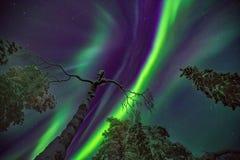 Explosion von Nordlichtern Stockfotografie