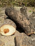 Explota los árboles la pila Fotos de archivo libres de regalías