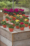 Expo da flor Foto de Stock Royalty Free