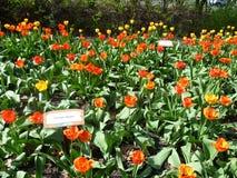Expo del tulipano Immagini Stock Libere da Diritti