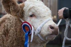 Expo 2017, Gran Bretagna di Agri Fotografia Stock