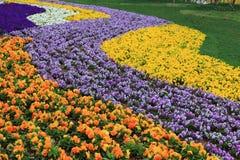 Expoblommaträdgård Arkivfoto