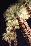 exponerad palmträd Royaltyfri Bild