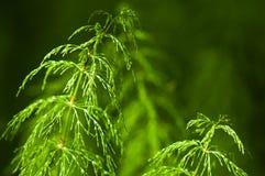 Exponerad växt för morgon sun i skog Royaltyfri Bild