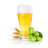 Exponeringsglas av öl med gröna flygturer och öron av korn royaltyfri fotografi