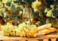 Exponeringsglas av druvor och br?d f?r vitt vin mogna p? tabellen i ving?rd royaltyfri fotografi