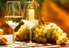 Exponeringsglas av druvor och br?d f?r vitt vin mogna p? tabellen i ving?rd royaltyfri bild