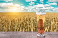 Exponeringsglas av kallt öl på solnedgången på bakgrunden av vetefältet och blå himmel Rekreation och kopplar av Nytt bryggat öl arkivbild