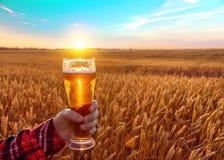 Exponeringsglas av kallt öl på solnedgången på bakgrunden av vetefältet och blå himmel SOMMAREN landskap Nytt bryggat öl royaltyfri foto