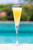 Exponeringsglas av mimosan Royaltyfri Fotografi