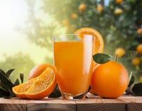 Exponeringsglas av orange fruktsaft och frukter Arkivbild