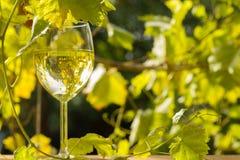 Exponeringsglas av vin i trädgård Arkivfoto