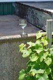 Exponeringsglas av vin nära sidor för druvavinranka Royaltyfri Foto