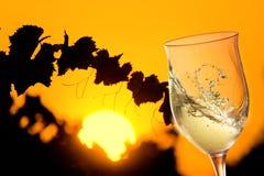 Exponeringsglas av vitt vin i solig vingård med sidor i silouette Royaltyfri Fotografi