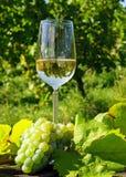Exponeringsglas av wine och druvor Arkivbilder