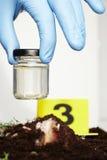 Exponeringsglas för att samla av den klipska larven på brottsplats Arkivfoto