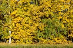 exponeringsglas låter vara lindenen misted över fotograferande yellow Royaltyfri Foto