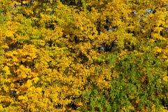 exponeringsglas låter vara lindenen misted över fotograferande yellow Arkivbilder