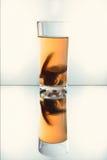 Exponeringsglas med kompott Arkivfoto