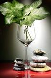 Exponeringsglas med murgrönasidor och kiselstenar Arkivfoto