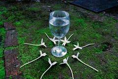 Exponeringsglas på moisted mossagolv royaltyfri fotografi