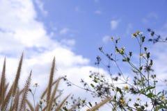 exponeringsglasblommablom i natur mot bakgrund för blå himmel arkivbilder