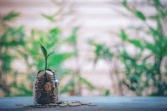 Exponeringsglaskruset med myntväxtplantor växer på flaskor - investeringidéer royaltyfri foto