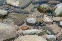 Exposé par la marée Photo stock