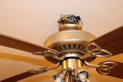 Exposed ceiling fan wires closeup. Fan is hanging from ceiling in picture Stock Image