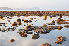 Exposed coral reef at low tide Royalty Free Stock Photography