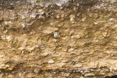 Exposed prehistoric fossils stone Stock Photography