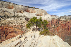 Exposed Ridge in Canyon Country Royalty Free Stock Images