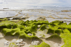 Exposed Rock Pools Royalty Free Stock Image