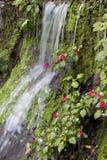 Exposed Waterfall Stock Image