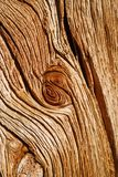 Exposed Wood Texture Royalty Free Stock Image