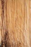 Bristlecone Pine Wood Background Stock Photo