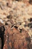 Exposer au soleil le gecko photographie stock