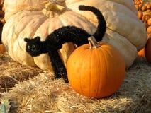 Exposição, abóbora alaranjada e um gato preto em um pacote de feno Fotos de Stock Royalty Free