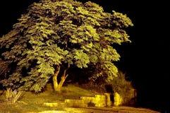 Exposição da árvore Fotos de Stock Royalty Free