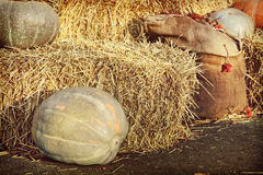 Exposição da ação de graças de abóboras e de pilhas grandes do feno Foto de Stock