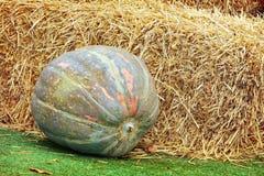 Exposição da ação de graças de pilhas grandes da abóbora e do feno em gras verdes Fotos de Stock Royalty Free