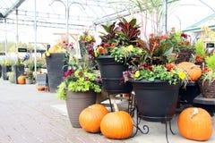Exposição da abóbora e da flor fotos de stock royalty free