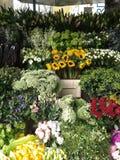 Exposição da flor Imagem de Stock Royalty Free
