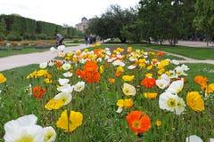 Exposição da mola das flores no parque Imagem de Stock Royalty Free